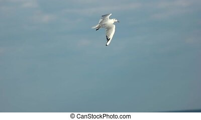 Gull flying over the sea. Bird and horizon. Flight of...