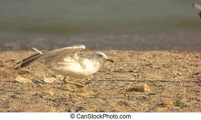 Seagull taking off, slow motion. Bird on seashore...