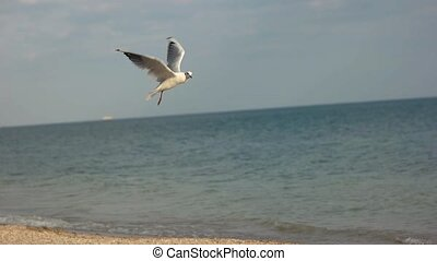 Seagull grabbing food. Bird on water background. What do...