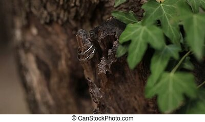 Wedding rings on a tree bark. Jewelry at wedding - Wedding...