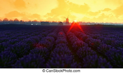 French lavander village with old windmill against morning sunrise, tilt