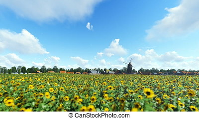 French sunflower village with old windmill against beautiful blue sky, panning