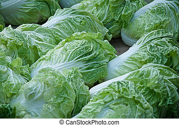 chinese cabbage 4 - fresh chinese cabbage at the market...