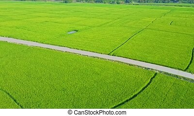 Aerial Drone Motion along Ground Road Amang Rice Fields -...