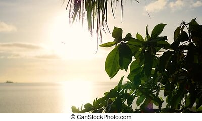The sun's rays passing through the palm branch. Tropical...