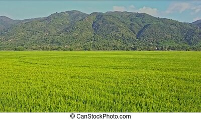 Drone Moves Over Rice Field to Railroad by Mountain Foot -...