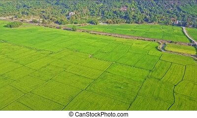 Aerial View Moving down to Rice Field against Rails Forest -...