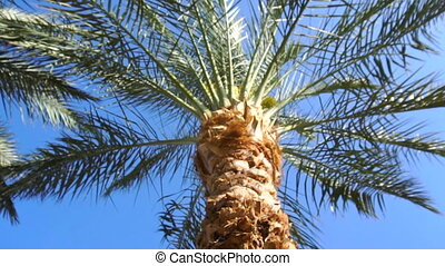 palm tree at bright sunny day - background of palm tree at...