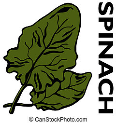 Spinach - An image of leaves of spinach
