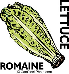 Romaine Lettuce - An image of romaine lettuce.