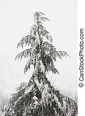 Fir tree in the snowstorm