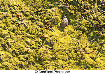 swamp green with dried snail,green concept