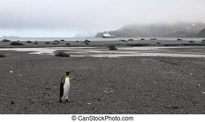 Cute penguin among seals on background of snow mountains and...