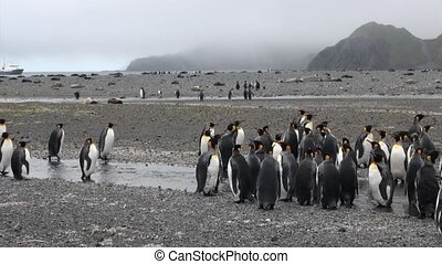 Group of important penguin on background of mountains and...