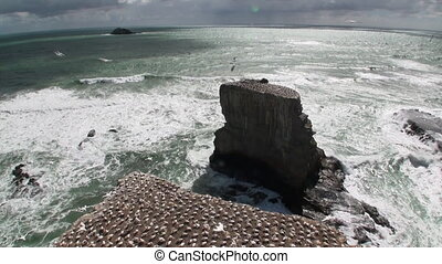 Birds on the coast rocks on background of seascape in New Zealand.