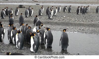 Many penguins on the ocean coast in Antarctica. Incredibly...