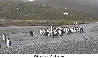 Group of important penguin on the ocean coast in Antarctica....