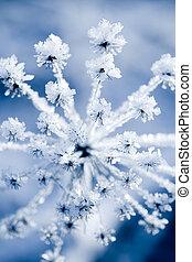 Frozen flower - Flower in winter with frozen ice crystals