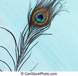 A Peacock feather on a wooden blue background with copy...