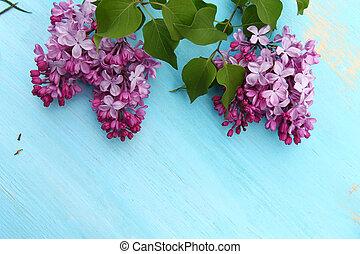 Pink fragrant Lilacs