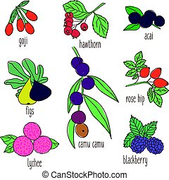 Colored Hand Drawn Botanical Food Set - Colored hand drawn...