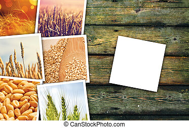 Wheat grains farming in agriculture photo collage,...