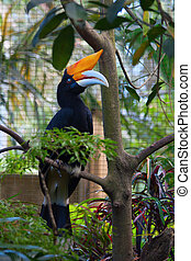 Hornbill in captivity in the bird park