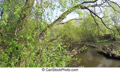 Dam on small river - Tree branch forming small dam of...