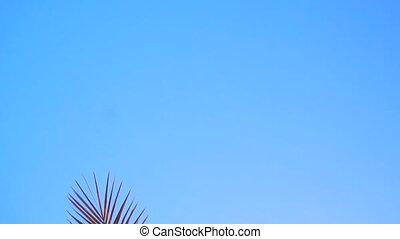 branches of Palm trees against the blue sky and sunlight -...