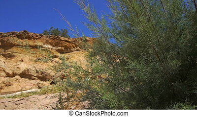 Big Green shrub amid the sandy Canyon and blue sky close-up