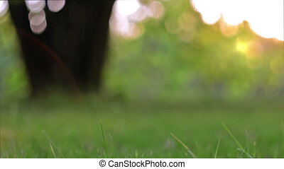 Spring green trees - Spring foliage on trees swaying in the...