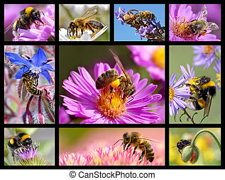 Bees and bumblebees mosaic - Ten mosaic photos bees and...