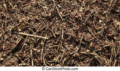 Background of a red ant colony - Rapid movement of ants in a...