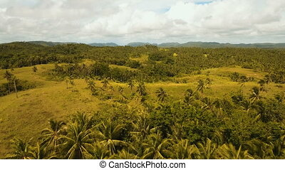 Aerial view of a rice field. Philippines, Siargao. - Rice...