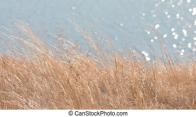 Dry field grass in front of the water reflection