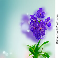 Bunch of blue orchids - Bunch of fresh blue orchid flowers...