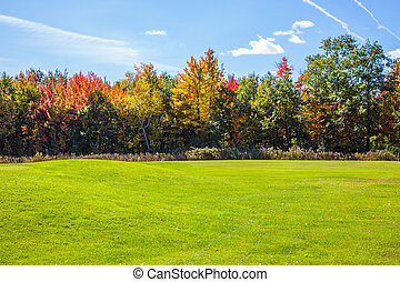 Grassy field in park - Grassy field in a beautiful park....