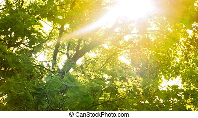 Rays of light shine through the tree