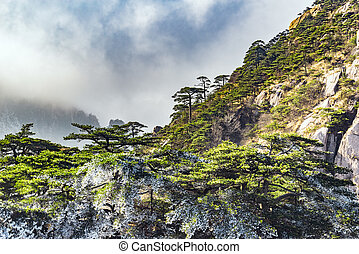 Huangshan National park. - Clouds above the forest in...