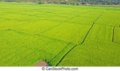 Moving Aerial View of Rice Field with Small Lake and Road -...