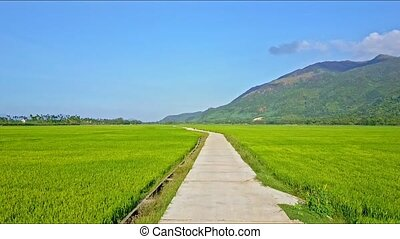 Rising Aerial View of Rice Field with Long Road against Sky...