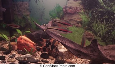 Aquarium colourfull fishes in dark deep blue water. aquarium...