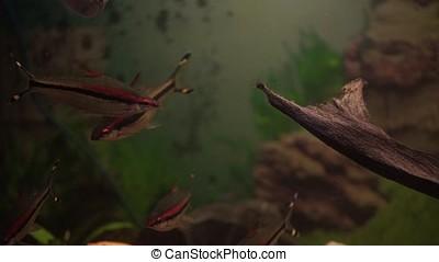 Aquarium colourfull fishes in dark deep blue water. aquarium...