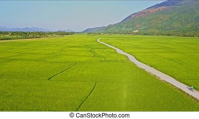 Drone Approaches Road among Rice Fields against Sky