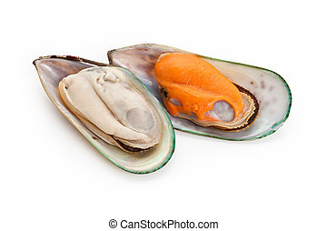Mussel - Raw Mussel with white background