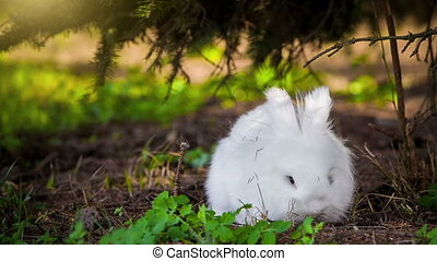 White rabbit outdoors - Small white rabbit outdoors