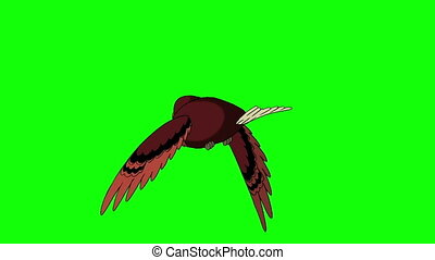 Brown Bird Flies. Back View. Animated Looped Motion Graphic...
