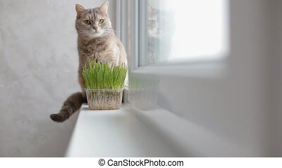 Grey cat sitting on the window sill behind the green grass...