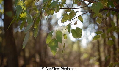 Sun light through the green foliage - Sun light through the...