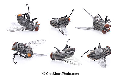 set of dead flies isolated on white background